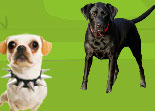 Chien � adopter